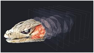 Модуль реконструкции данных КТ преобразует трёхмерных объёмы данных из проекционных изображений, полученных с помощью томографии